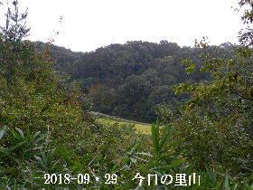2018-09・29 今日の里山は・・・ (3).JPG