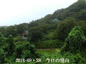 2018-09・29 今日の里山は・・・ (4).JPG