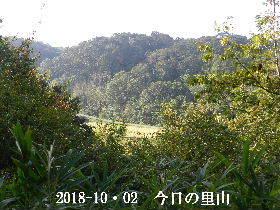 2018-10・02 今日の里山は・・・ (3).JPG