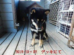 2018-10・02 今日の麻呂 (4).JPG