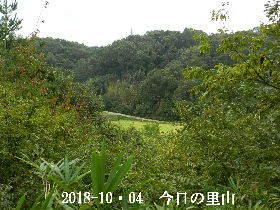 2018-10・04 今日の里山は・・・ (3).JPG