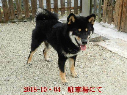2018-10・04 今日の麻呂 (4).JPG