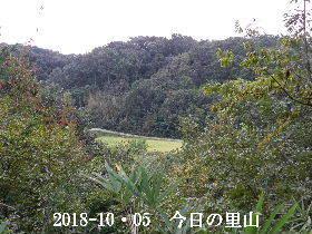 2018-10・05 今日の里山は・・・ (3).JPG