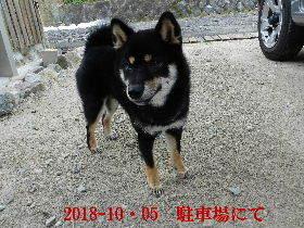 2018-10・05 今日の麻呂 (6).JPG