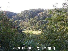 2018-10・09 今日の里山は・・・ (3).JPG