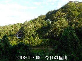 2018-10・09 今日の里山は・・・ (4).JPG