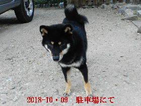 2018-10・09 今日の麻呂 (3).JPG