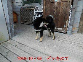2018-10・09 今日の麻呂 (4).JPG
