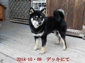 2018-10・09 今日の麻呂 (5).JPG