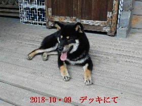 2018-10・09 今日の麻呂 (6).JPG
