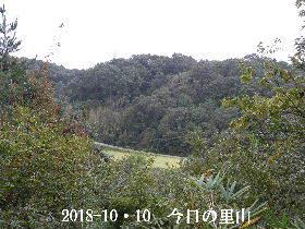 2018-10・10 今日の里山は・・・ (3).JPG