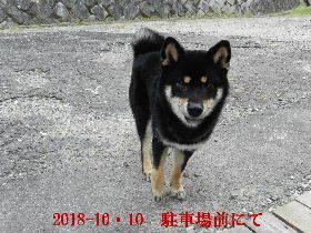 2018-10・10 今日の麻呂 (4).JPG