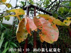 2018-10・10 里山も紅葉が・・・ (1).JPG