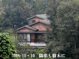 2018-10・10 隣家も樹木に囲まれて (1).JPG