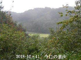 2018-10・11 今日の里山は・・・ (3).JPG