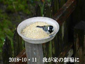 2018-10・11 我が家の居候達 (1).JPG