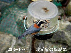 2018-10・11 我が家の居候達 (3).JPG