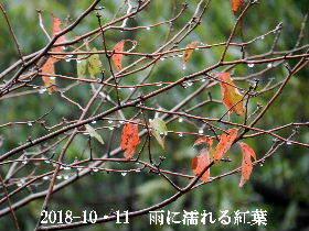 2018-10・11 里山の四季 (2).JPG