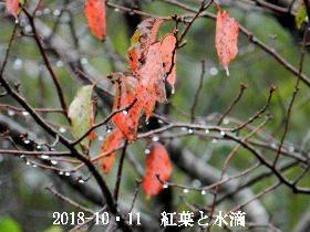 2018-10・11 里山の四季 (4).JPG