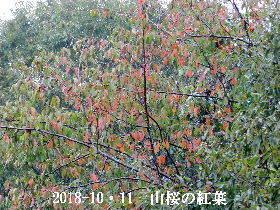 2018-10・11 里山の四季 (5).JPG