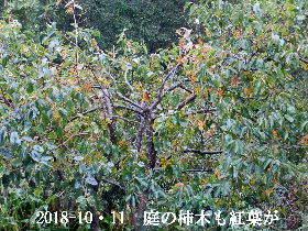 2018-10・11 里山の四季 (6).JPG