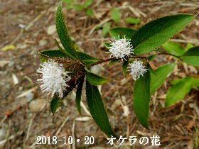 2018-10・20 今日の出遭い・・・ (1).JPG