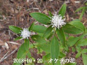 2018-10・20 今日の出遭い・・・ (3).JPG