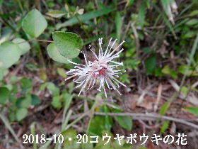 2018-10・20 今日の出遭い・・・ (4).JPG