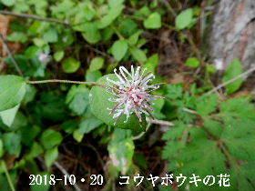2018-10・20 今日の出遭い・・・ (5).JPG