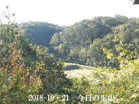 2018-10・21 今日の里山は・・・ (3).JPG