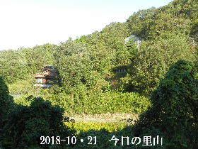 2018-10・21 今日の里山は・・・ (4).JPG