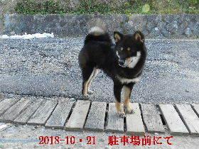 2018-10・21 今日の麻呂 (5).JPG