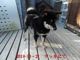 2018-10・21 今日の麻呂 (6).JPG