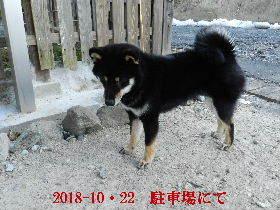 2018-10・22 今日の麻呂 (4).JPG