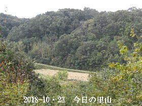 2018-10・23 今日の里山は・・・ (3).JPG