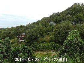 2018-10・23 今日の里山は・・・ (4).JPG