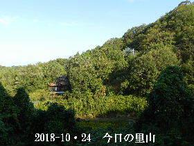 2018-10・24 今日の里山は・・・ (4).JPG