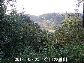2018-10・25 今日の里山は・・・ (3).JPG