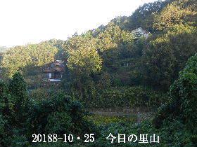2018-10・25 今日の里山は・・・ (4).JPG