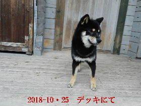 2018-10・25 今日の麻呂 (7).JPG