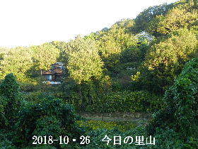 2018-10・26 今日の里山は・・・ (4).JPG