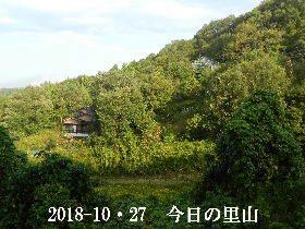 2018-10・27 今日の里山は・・・ (4).JPG