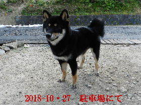 2018-10・27 今日の麻呂 (7).JPG