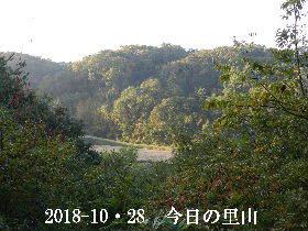 2018-10・28 今日の里山は・・・ (3).JPG