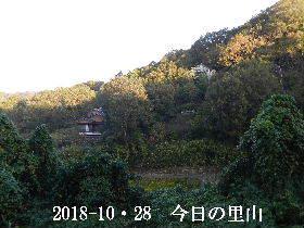 2018-10・28 今日の里山は・・・ (4).JPG
