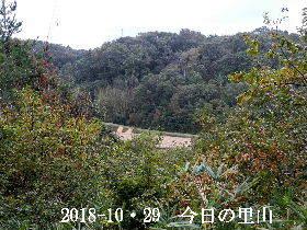 2018-10・29 今日の里山は・・・ (3).JPG