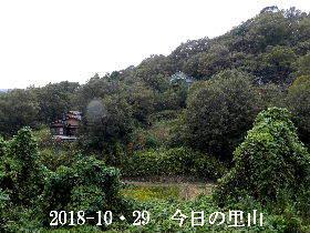 2018-10・29 今日の里山は・・・ (4).JPG