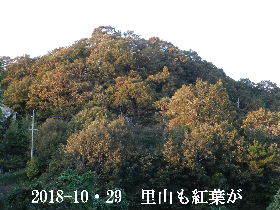 2018-10・29 里山も紅葉が進んで (4).JPG