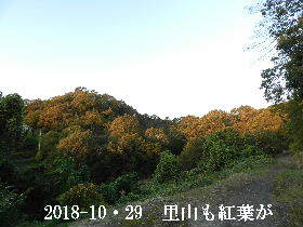 2018-10・29 里山も紅葉が進んで (5).JPG