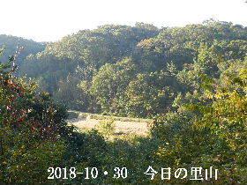 2018-10・30 今日の里山は・・・ (3).JPG
